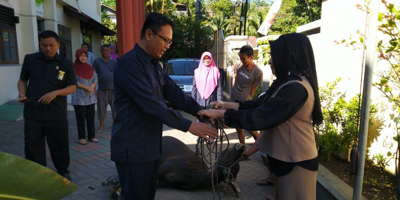 Warga Pengadilan Agama Manado Kurban Dua Ekor Sapi di Hari Tasyrik 1440 H